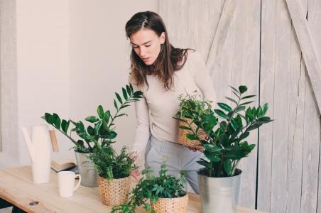 Cele mai eficiente plante pentru un aer curat in locuinta ta